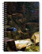 Blue Little Fish In Aquarium Spiral Notebook