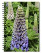 Blue Lupin Spiral Notebook
