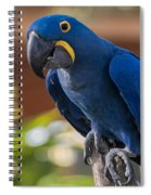 Blue Macaw Spiral Notebook