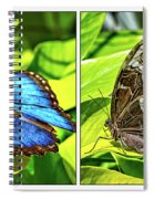 Blue Morpho Butterfly Diptych Spiral Notebook