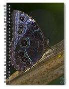 Blue Morpho.. Spiral Notebook