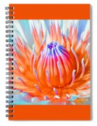 Blue Orange Lily Spiral Notebook