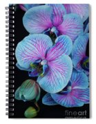 Blue Orchid On Black Spiral Notebook