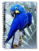 Blue Parrot Spiral Notebook