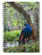 Blue Peacock  Spiral Notebook