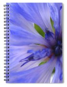 Blue Princess Spiral Notebook