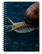 Blue Snail Spiral Notebook