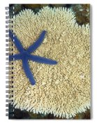 Blue Starfish Spiral Notebook