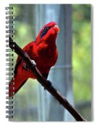 Blue-streaked Lory Spiral Notebook
