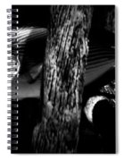Blue Tip Spiral Notebook