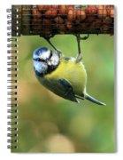 Blue Tit At Garden Feeder Spiral Notebook