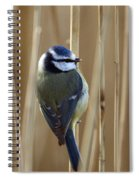 Blue Tit On Reed Spiral Notebook