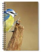 Blue Tit Perched Spiral Notebook