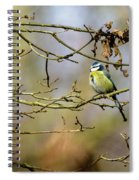 Blue Tit Woods Spiral Notebook