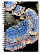 Blue Turkeytail Fungi Spiral Notebook
