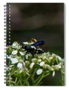 Blue Wasp 1 Spiral Notebook