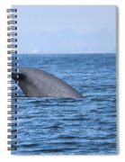 Blue Whale Tail Flop Spiral Notebook