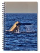 Blue Whales Tail Spiral Notebook
