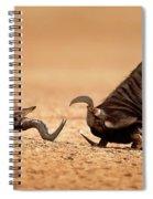 Blue Wildebeest Sparring With Red Hartebeest Spiral Notebook