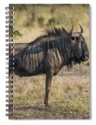 Blue Wildebeest Standing On Savannah Staring Ahead Spiral Notebook