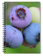 Blueberries On The Vine 2 Spiral Notebook