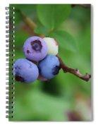 Blueberries On The Vine 3 Spiral Notebook
