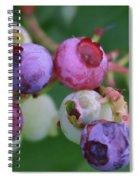 Blueberries On The Vine 5 Spiral Notebook
