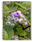 Blueberries On The Vine 7 Spiral Notebook