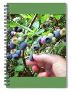 Blueberry Bush Spiral Notebook