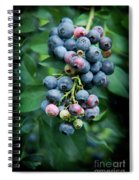 Blueberry Cluster Spiral Notebook