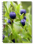 Blueberry Shrubs Spiral Notebook