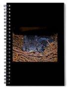 Bluebird Babies Dreaming Of Flight Spiral Notebook