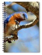 Bluebird Curiousity Spiral Notebook