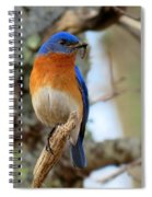 Bluebird Dad Spiral Notebook