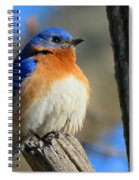 Bluebird Evening Spiral Notebook