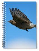 Bluebird Glide Spiral Notebook