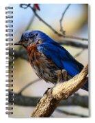 Bluebird In May Spiral Notebook