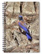 Bluebird On Canary Island Palm I Spiral Notebook