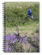 Bluebird Pair In Blickleton Spiral Notebook
