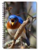 Bluebird Temper Spiral Notebook