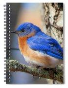 Bluebird Vibrance Spiral Notebook