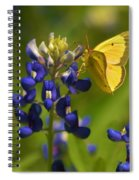 Bluebonnet And Butterfly Spiral Notebook