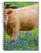 Bluebonnet Cow Spiral Notebook