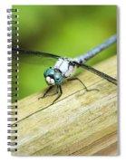 Blued Eyed Darner Spiral Notebook