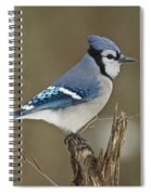 Bluejay 012 Spiral Notebook