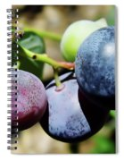 Blues In The Florida Berries Spiral Notebook