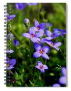 Bluets Spiral Notebook