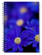 Bluey Gerbera Spiral Notebook