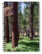 Bluff Lake Ca Fern Forest 2 Spiral Notebook