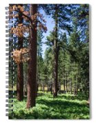 Bluff Lake Ca Fern Forest 3 Spiral Notebook